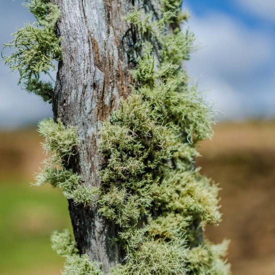 lichens 3