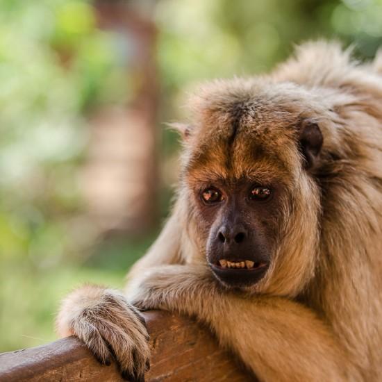 portrait de singe à samaipata 13