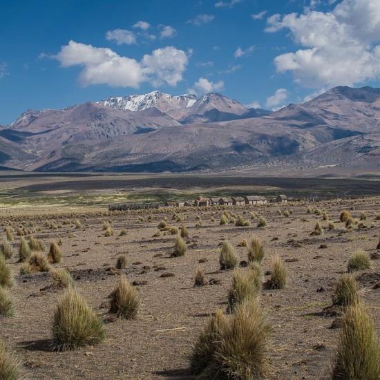 steppe a sajama