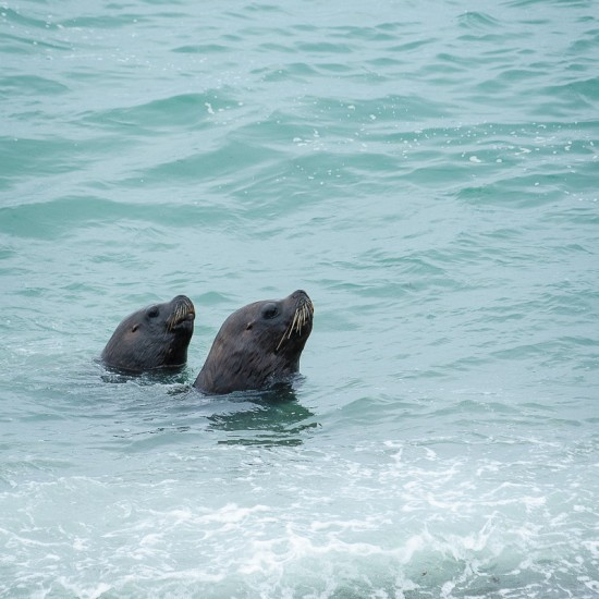 faune-lions-de-mer-peninsule-valdes-puerto-madryn-7